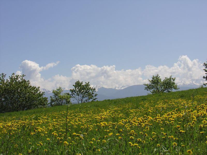 Surroundings Location Apartment 104639 Andalo - Fai della Paganella