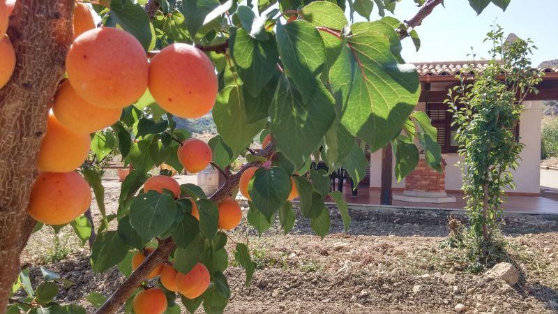 Garden Location Villa 66027 Scopello