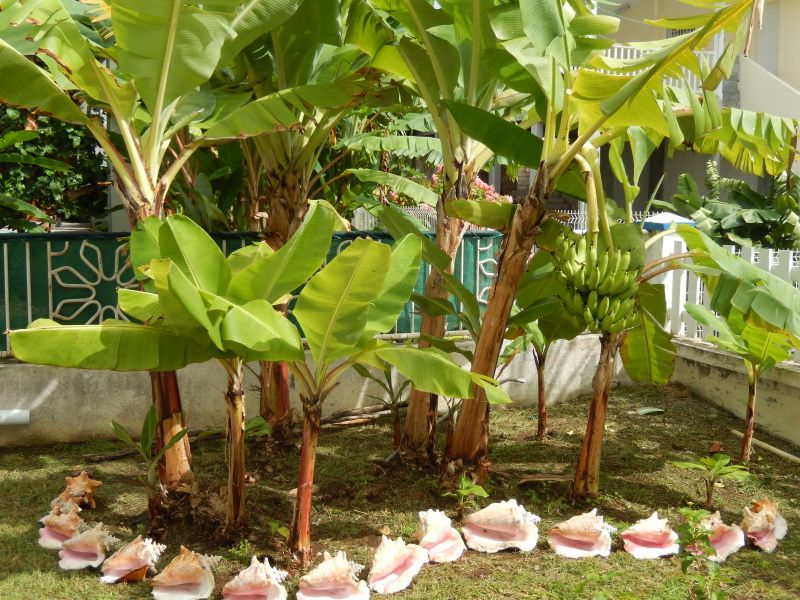 Garden Location Apartment 82066 Saint Francois