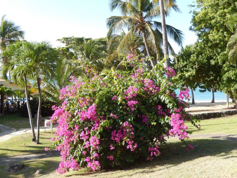 Beach Location Apartment 82066 Saint Francois