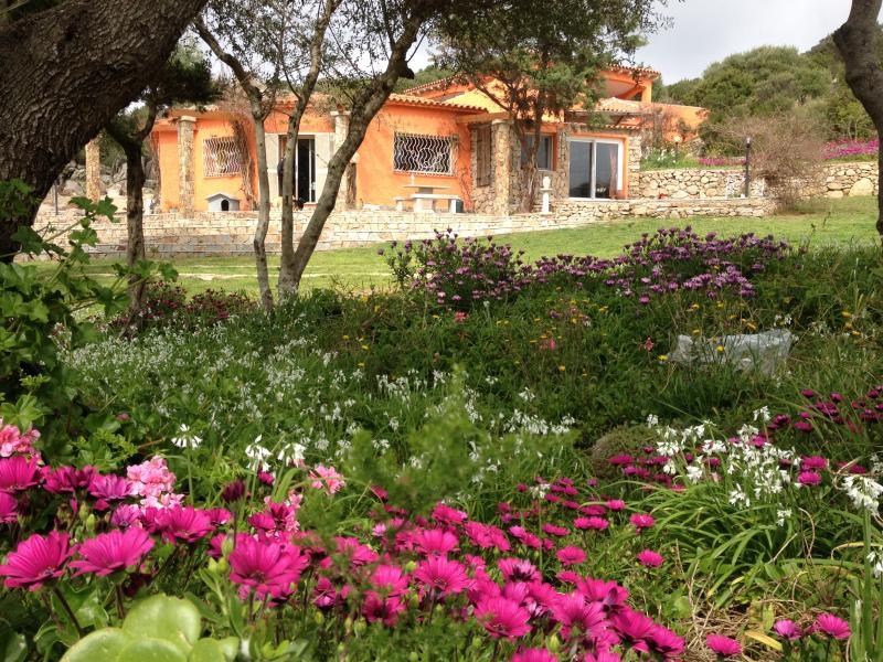 Garden Location Villa 29667 Santa Teresa di Gallura