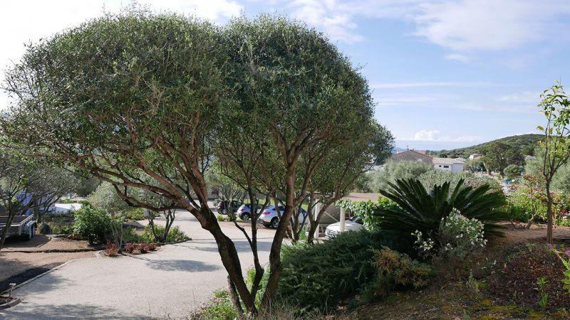 Parking Location Apartment 50333 Porto Pollo