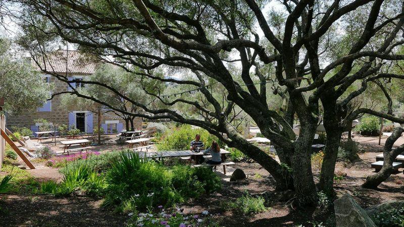 Garden Location Apartment 50333 Porto Pollo