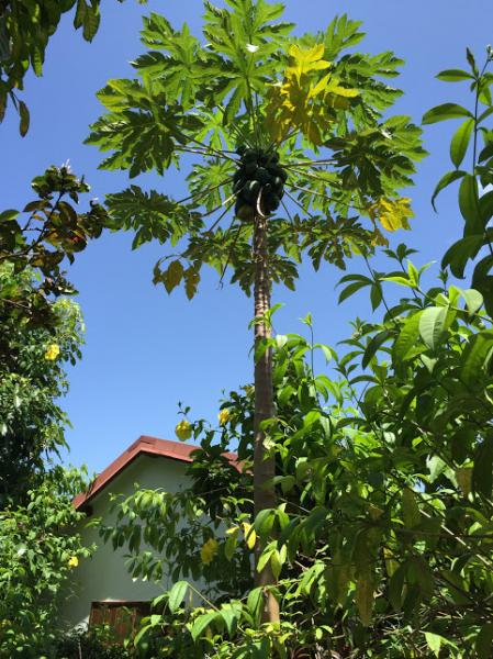Surroundings Location Bungalow 8003 Gosier (Guadeloupe)