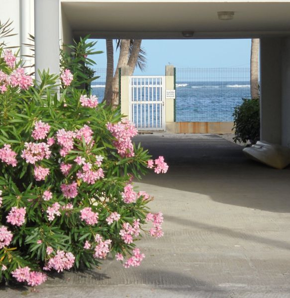 Garden Location Apartment 108495 Sainte Anne (Guadeloupe)
