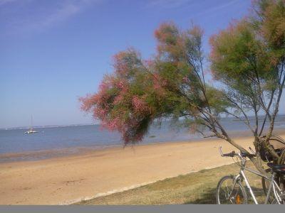Location Vacation rental 91292 Andernos les Bains