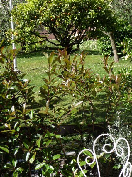 Garden Location Apartment 110242 Roquebrune Cap Martin