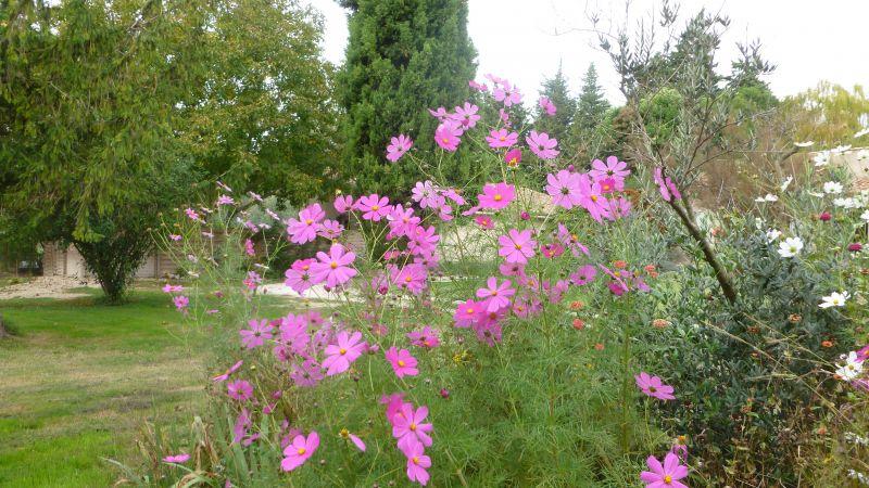 Garden Location Vacation rental 98340 Saint Rémy de Provence