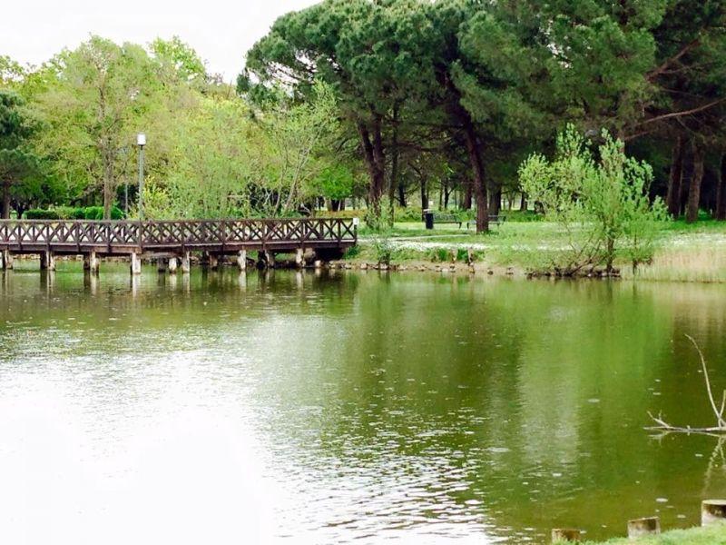 Surroundings Location Apartment 81806 Bellaria Igea Marina
