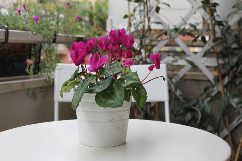 Balcony Location Apartment 66395 Rome