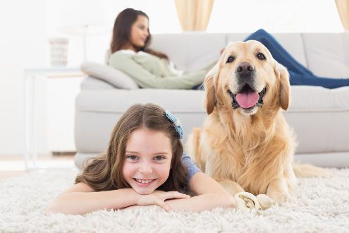 6332 pet-friendly rentals